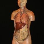 Storia dei Modelli anatomici