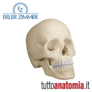 erler-zimmer-cranio-scomponibile-22-parti
