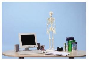 modelli anatomici scheletro in miniatura