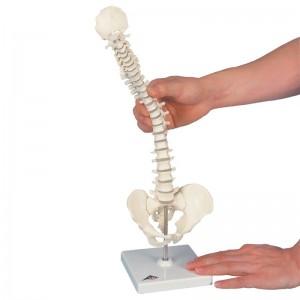 Mini colonna vertebrale elastica su stativo