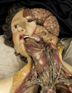 modelli anatomici in cera