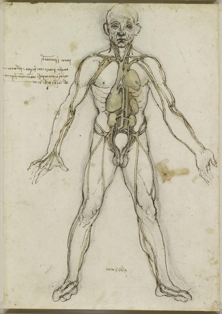 Tavole anatomiche Leonardo da vinci