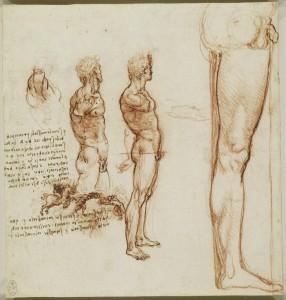 Tavola anatomica - i muscoli della spalla, torso e gambe