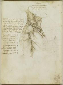 Tavole anatomiche - anatomia della spalla, del collo e dei vasi pelvici