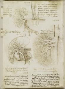 Tavole anatomiche - I vasi e i nervi del collo, i vasi del fegato