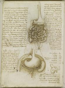 Tavole anatomiche - il tratto gastrointestinale e la vescica