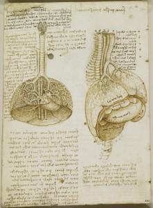 Tavole anatomiche - la vescica e i polmoni
