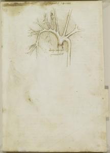 Tavole anatomiche - le arterie della spalla