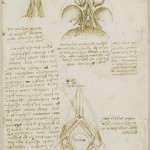 Tavole Anatomiche