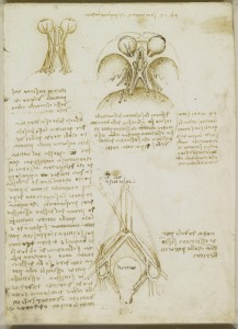 Tavole anatomiche - l'anatomia dei nervi del cranio