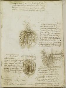 Tavole anatomiche - mesentere dell'intestino e plesso brachiale