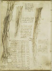 Tavole anatomiche, studio dell'anatomia del plesso brachiale e i nervi del braccio