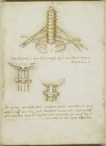 Tavole anatomiche, studio dell'anatomia del plesso brachiale e dei vasi ombelicali