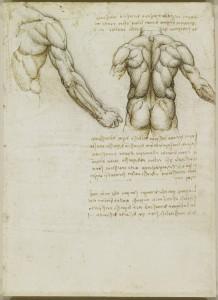 Tavole anatomiche, studio dell'anatomia dei muscoli della schiena e del braccio