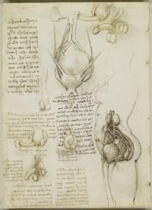 Tavole anatomiche, studio dell'anatomia del sistema riproduttivo maschile e femminile