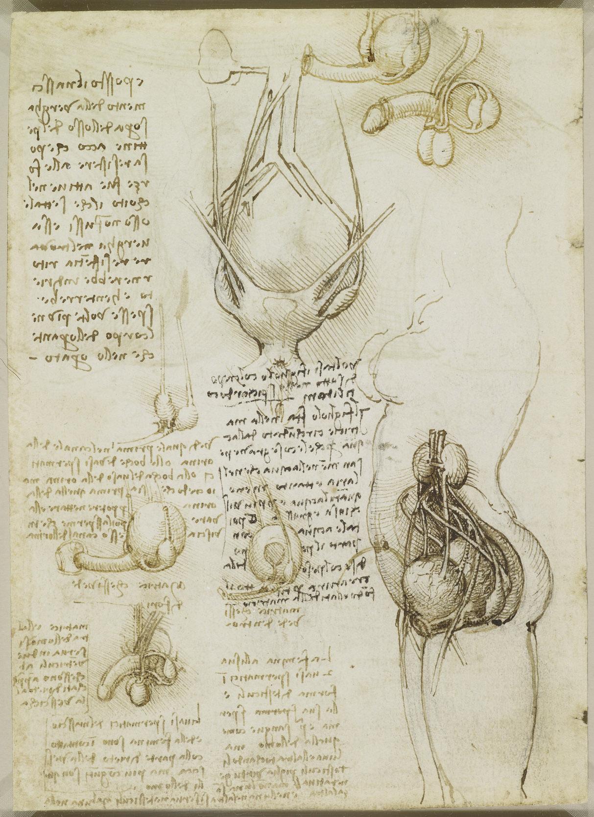 La Vulva e l\'ano, il sistema riproduttivo maschile e femminile ...
