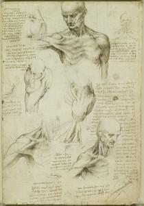 Tavole anatomiche, studio dell'anatomia superficiale della spalla e del collo