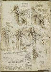 Tavole anatomiche, studio dell'anatomia dei muscoli della colonna vertebrale superiore