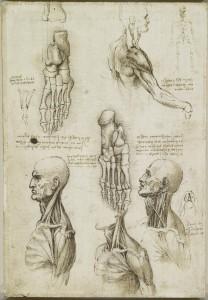 Tavole anatomiche - Scheletro del piede, muscoli della gamba, del collo e la gola - Leonardo