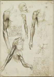 Tavole anatomiche - muscoli del braccio, vene del braccio e del tronco - Leonardo