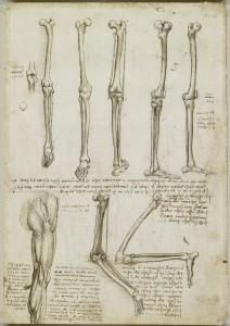 Tavole anatomiche - scheletro della gamba, muscoli della spalla, braccio e collo - Leonardo