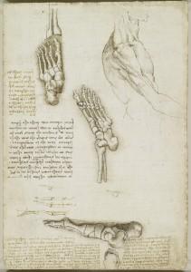 Tavole anatomiche – Anatomia dello scheletro del piede, scheletro e muscoli del braccio
