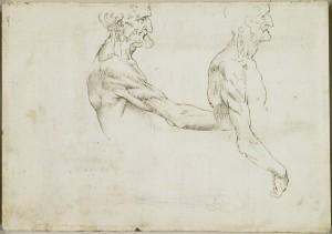 Tavole anatomiche – Anatomia della colonna vertebrale