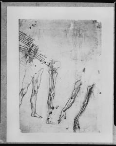 Scheletro e nervi del braccio, Leonardo da Vinci