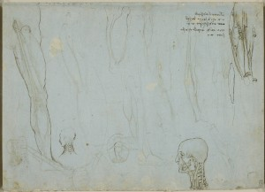 Tavole anatomiche Leonardo, il cranio umano