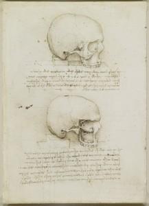 tavole anatomiche anatomia del cranio