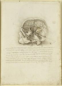 tavola anatomica sezione del cranio