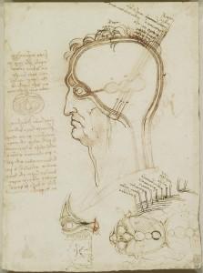 tavole anatomiche, gli strati del cuoio capelluto, Leonardo da Vinci